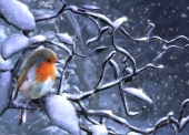 Christmas Cards Design ~ Robin on Branch